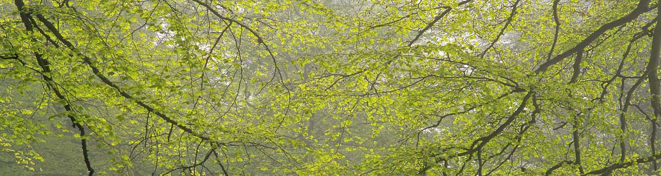 Woodland 1310 x 350